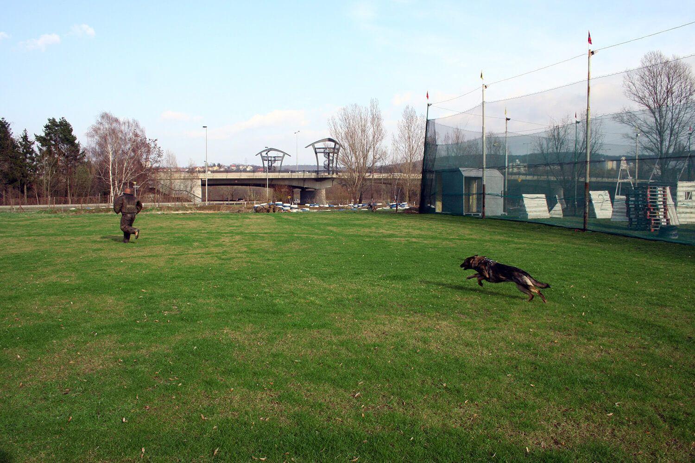 Dog chase 1