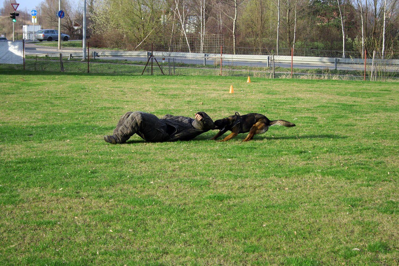 Dog chase 3
